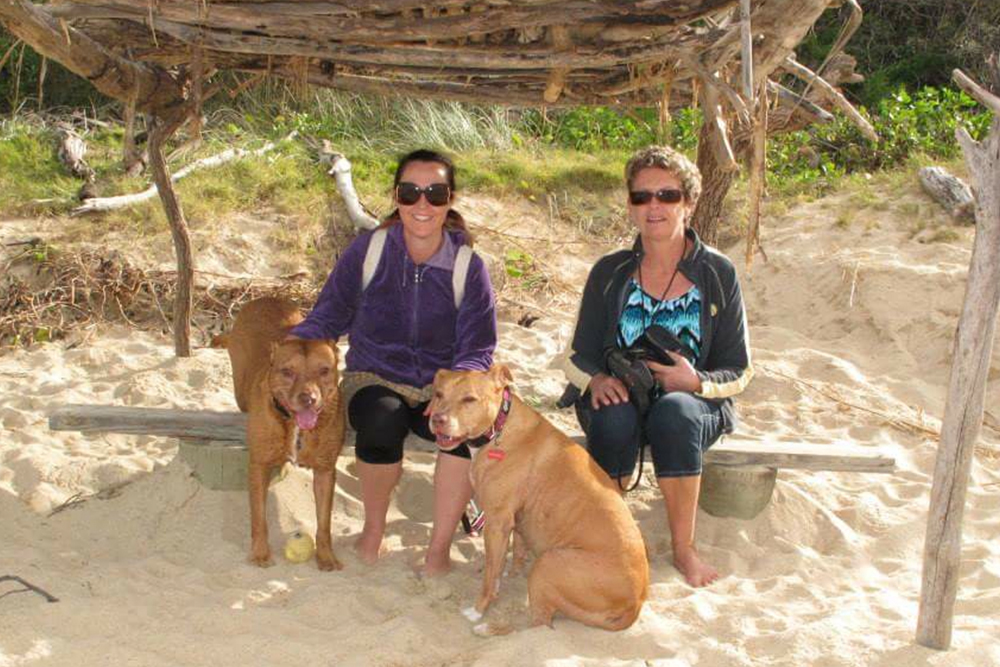 Dog friendly pet friendly beach New South Wales