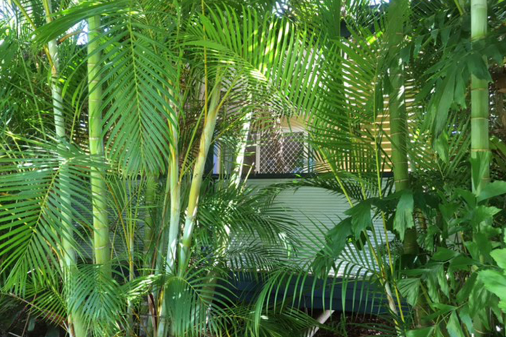 Safety Beach Bungalows pet friendly Accommodation near woolgoolga and coffs harbour The Beach Hut