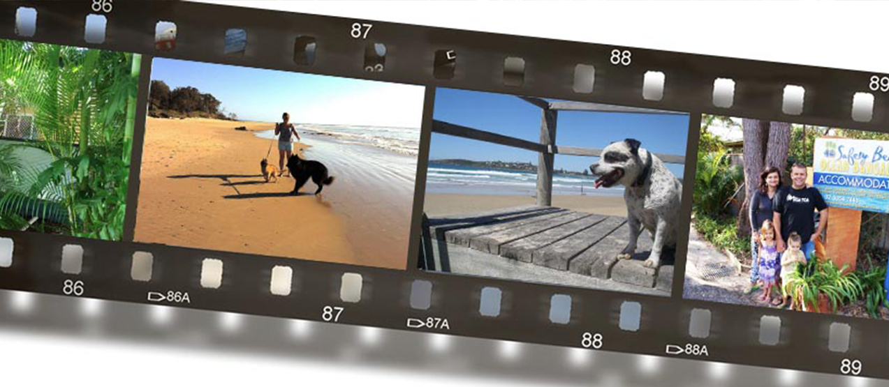 dog walk beach Pet friendly accommodation Woolgoolga & Coffs Harbour safety beach bungalows