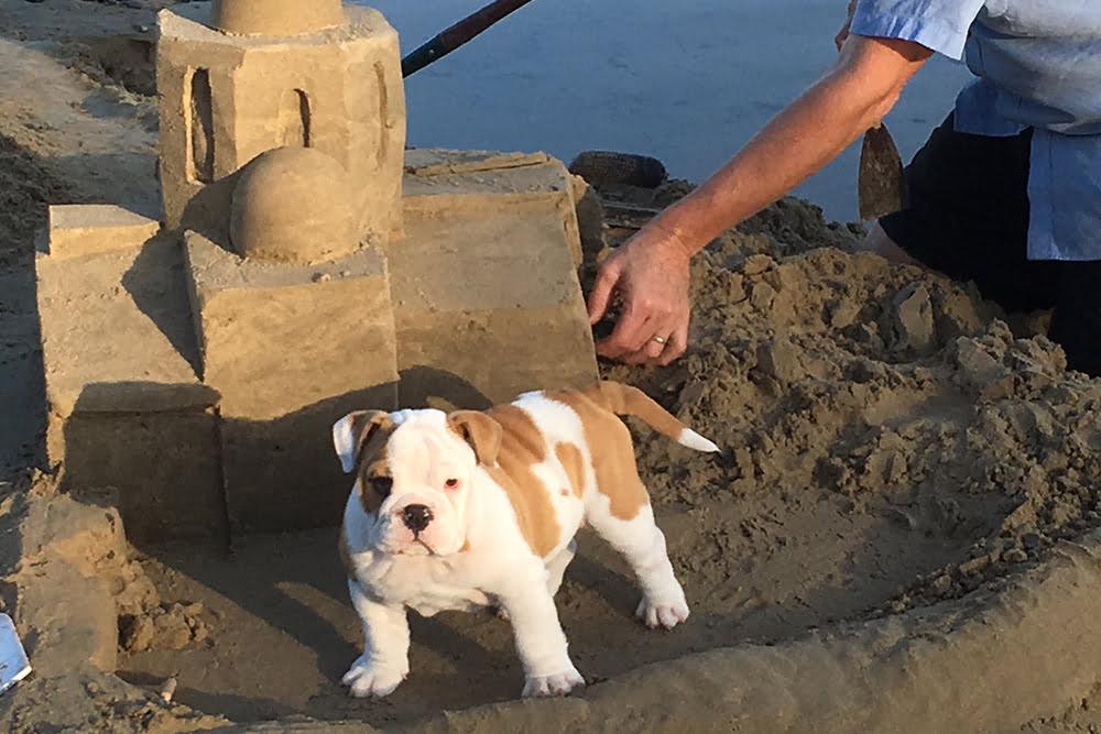 Dog beach accommodation Safety Beach