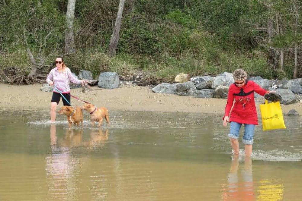 Dog beach pet friendly accommodation New South Wales
