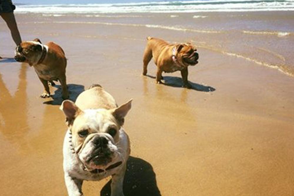 Dog beach near Woolgoolga & Coffs Harbour