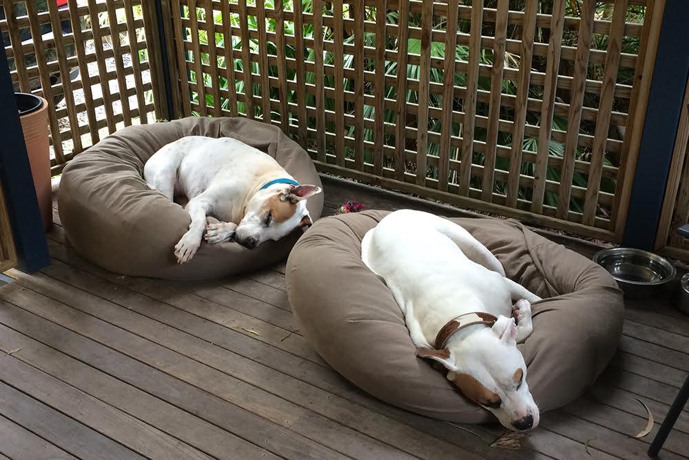 Dog friendly accommodation near Coffs Harbour