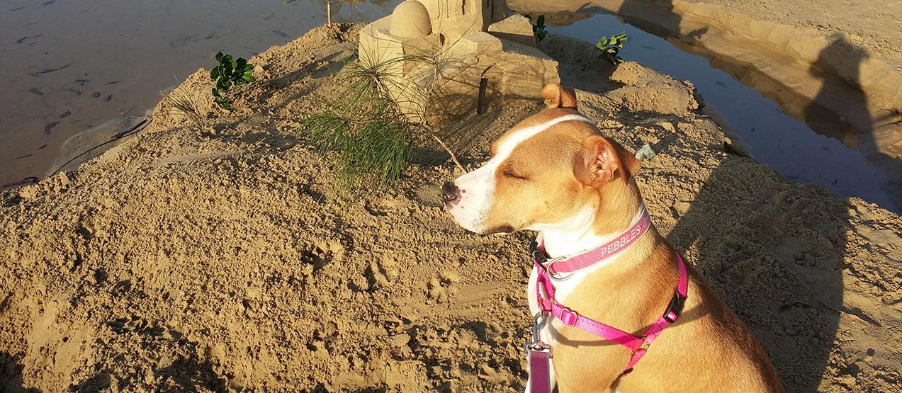 Dog beach Pet friendly accommodation Woolgoolga & Coffs Harbour Safety beach bungalows